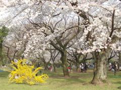 桜てんこもりのお散歩_e0065433_200962.jpg