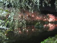 夜桜見物_b0016474_16182847.jpg