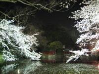 夜桜見物_b0016474_16205056.jpg