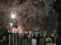 夜桜見物_b0016474_16222475.jpg
