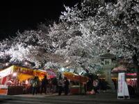 夜桜見物_b0016474_16231052.jpg