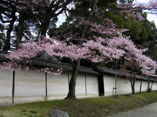 醍醐寺1_e0048413_22344096.jpg