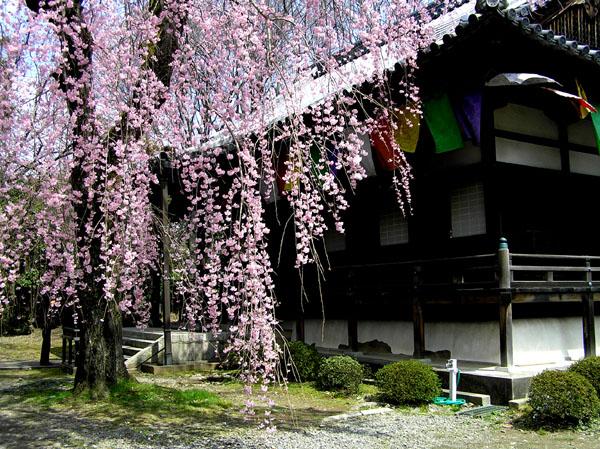 醍醐寺3_e0048413_22452651.jpg