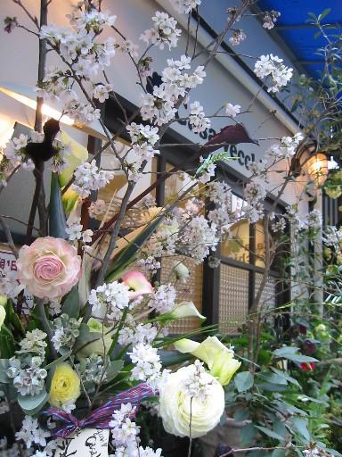 桜満開_d0005824_1226993.jpg