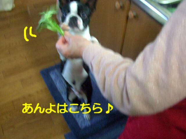 f0059334_995951.jpg