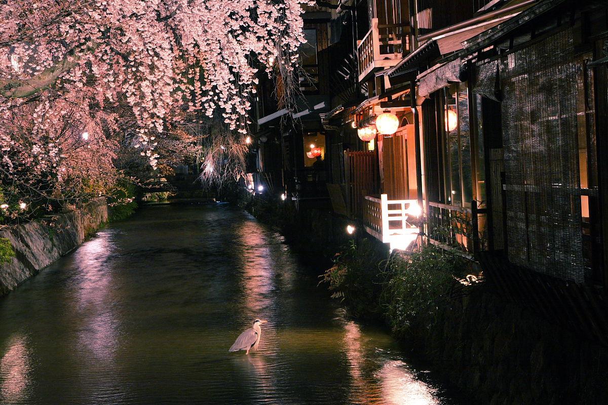 祇園白川 2_f0021869_044625.jpg
