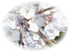 f0060304_23111853.jpg