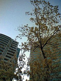 花見ラン_a0036808_030441.jpg