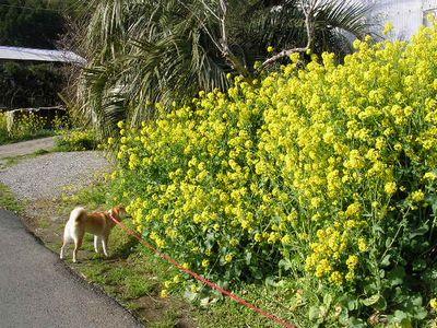 2006年4月4日明日から南イタリア_f0060461_14295933.jpg