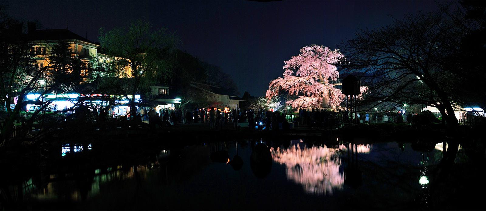 千本釈迦堂の阿亀桜_f0021869_1541136.jpg