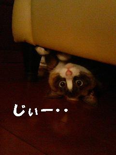 f0076702_1147513.jpg
