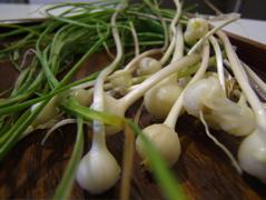 のびる山菜日和_c0004024_6563290.jpg