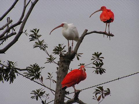 花鳥園に居た鳥たち_a0030958_2326780.jpg
