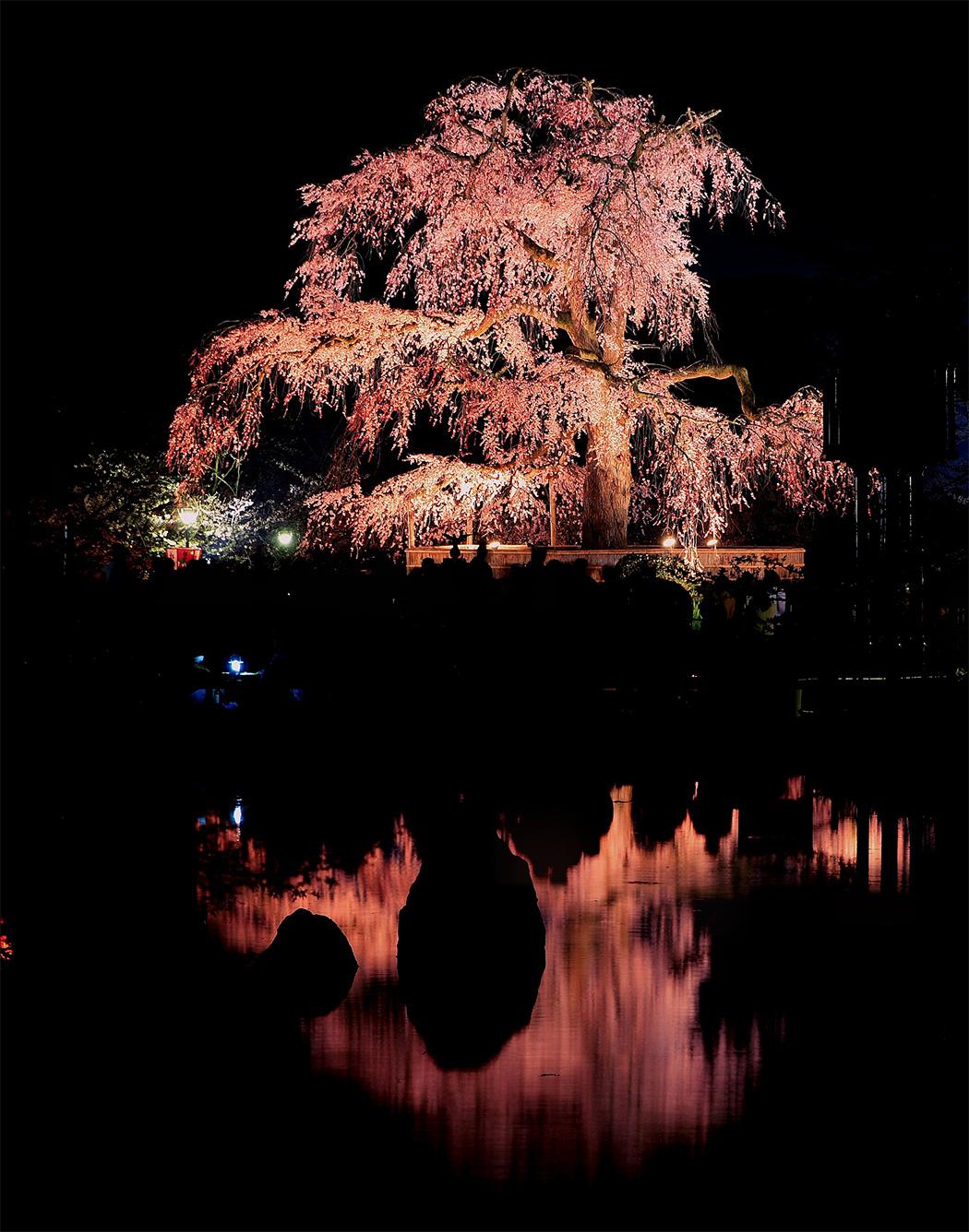 平野神社_f0021869_0301946.jpg