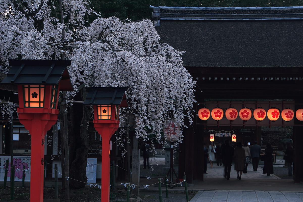 平野神社_f0021869_0381010.jpg