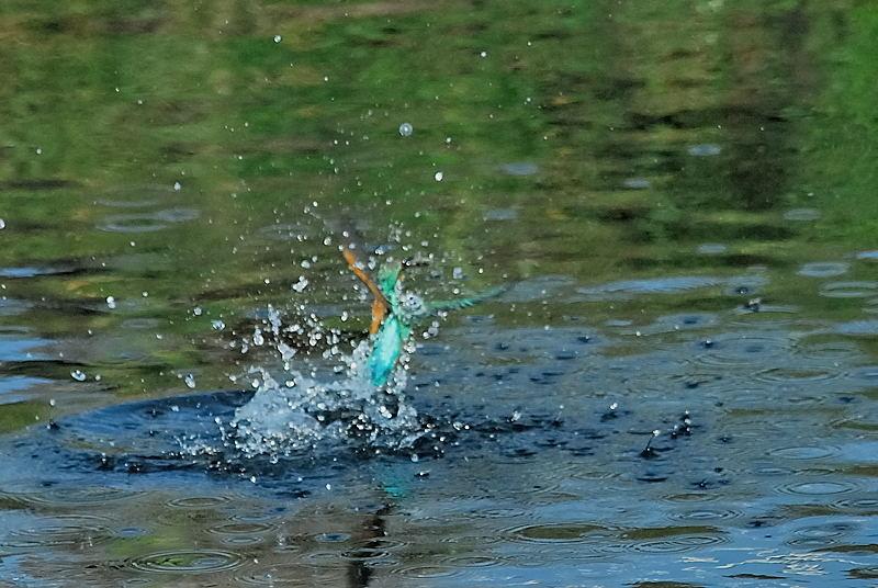 川面からの飛び出し_b0024798_657680.jpg
