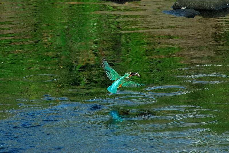 川面からの飛び出し_b0024798_658911.jpg