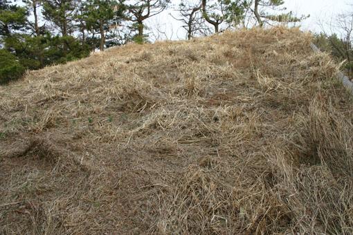 芝置屋根の福寿草_e0054299_13162483.jpg
