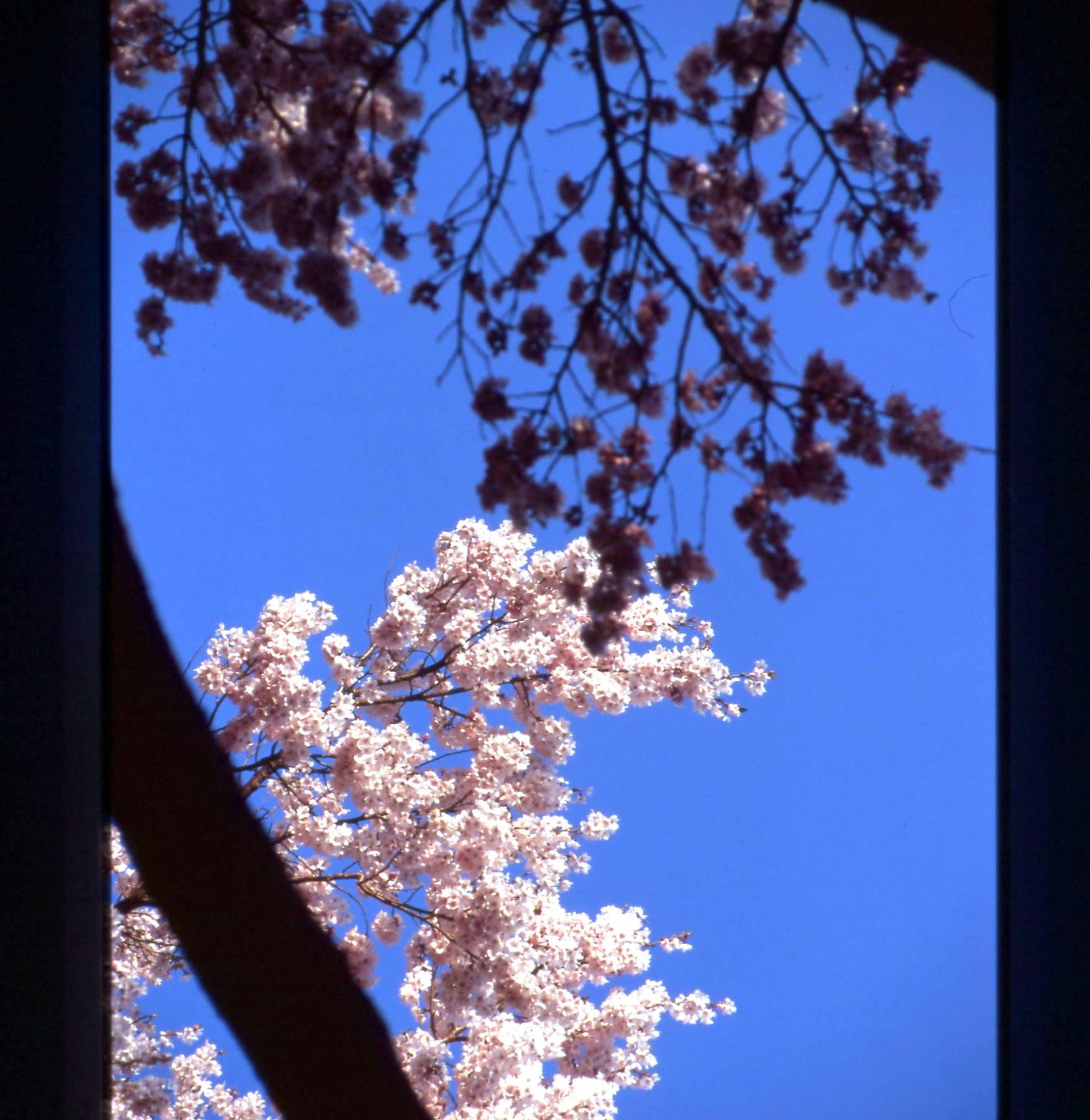 車窓から_f0079943_15163877.jpg