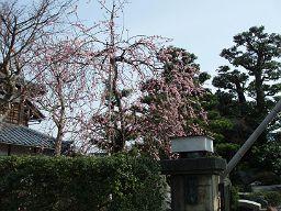 近所の桃の花_e0063268_163486.jpg