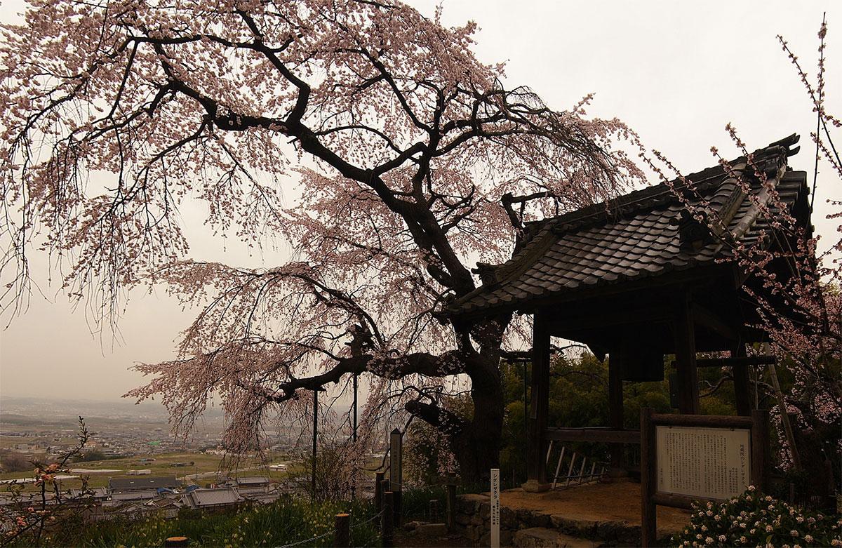 地蔵禅院_f0021869_023895.jpg