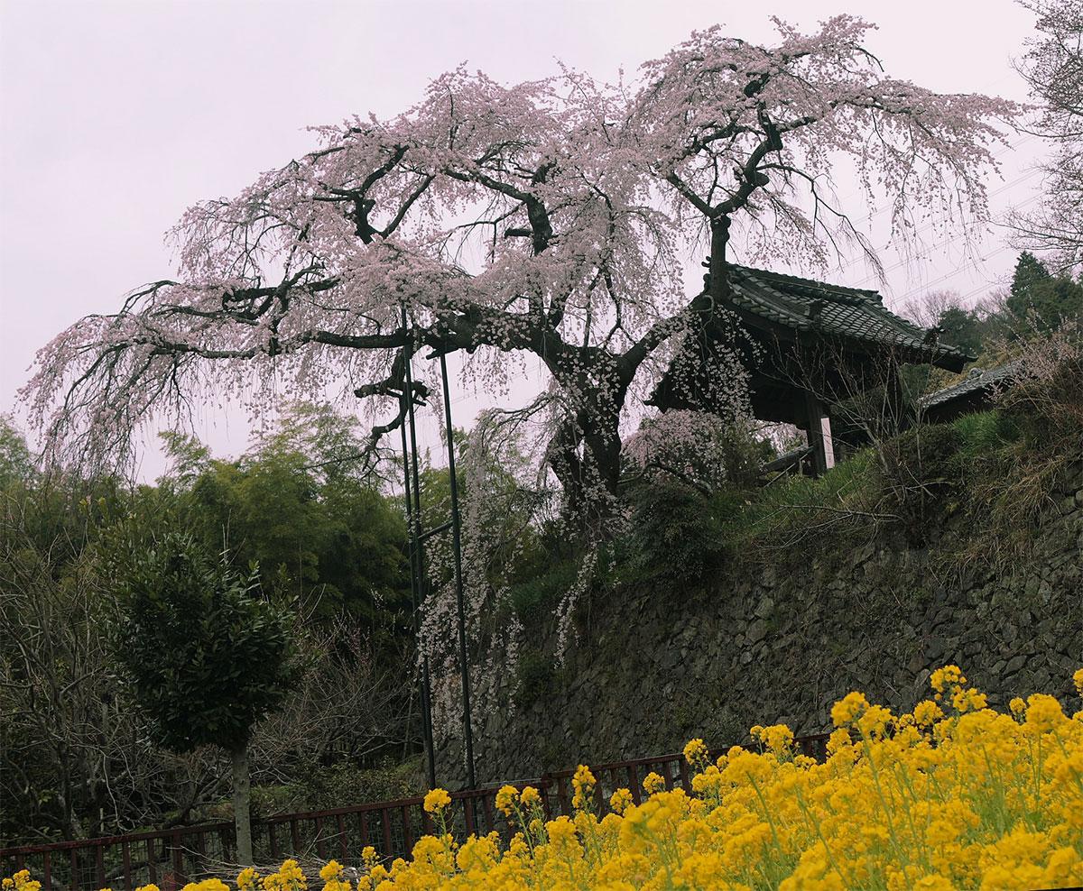 地蔵禅院_f0021869_033476.jpg