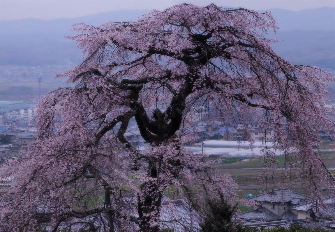 地蔵禅院_f0021869_041090.jpg