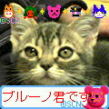 a0048197_224124.jpg