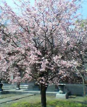 春の香り_d0052485_1658481.jpg