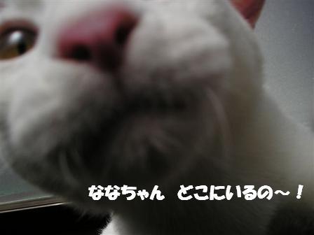 c0000189_16193174.jpg