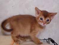 アビシニアン子猫4週目_e0033609_13543324.jpg