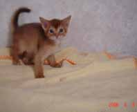 アビシニアン子猫4週目_e0033609_1355417.jpg