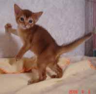 アビシニアン子猫4週目_e0033609_13554880.jpg