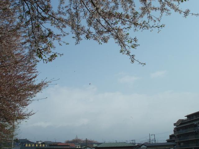 桜吹雪と彩雲_e0077521_13493334.jpg