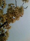 b0060945_169662.jpg