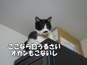 b0041182_1364474.jpg