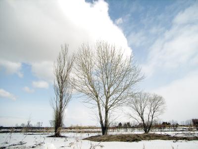残雪と長距離移動_c0033513_11454065.jpg