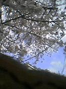 花見どき_f0061394_12164914.jpg
