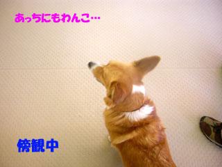 f0077097_1916517.jpg