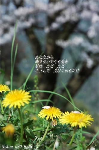f0080530_104120.jpg