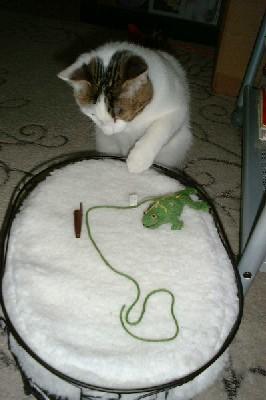 天才な僕と、猫より眠るママ_d0057858_22493496.jpg
