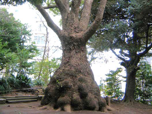 玉川神社_f0091067_1349566.jpg