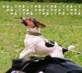 b0002585_15155284.jpg