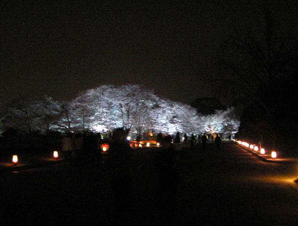 植物園_e0048413_21353946.jpg