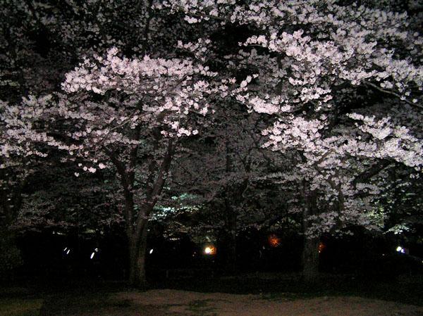 植物園_e0048413_2136342.jpg