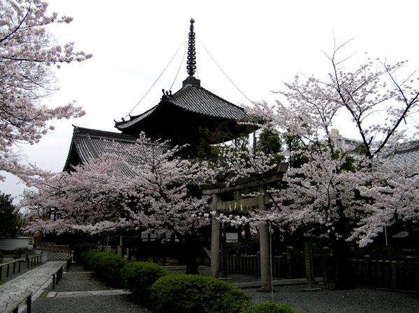 本法寺と裏千家_e0048413_2233598.jpg
