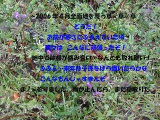 d0029826_1141301.jpg