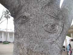 木の目玉_b0054727_2392583.jpg