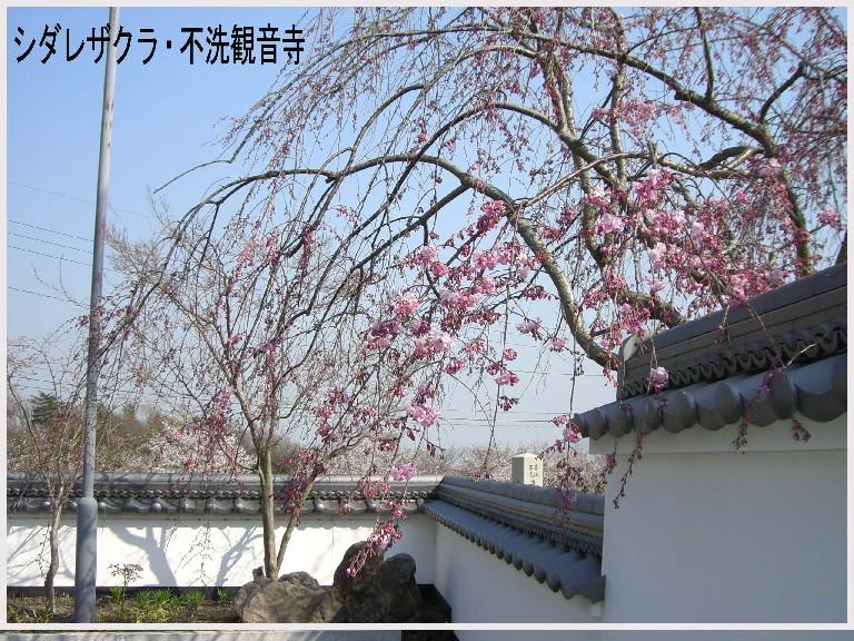 ピンク色の景色・・・。_f0045132_11124115.jpg