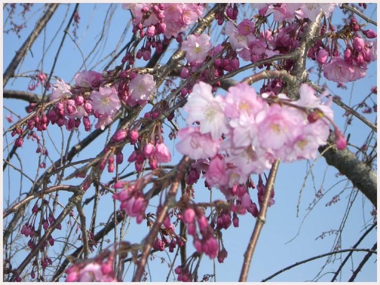 ピンク色の景色・・・。_f0045132_11152645.jpg